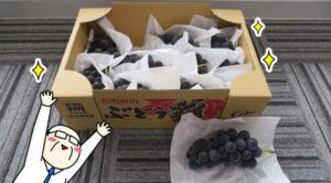今年も須坂の美味しいブドウが届きました!!